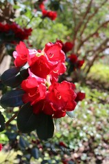 0 rhododendron 2