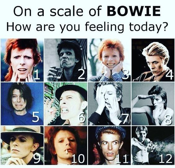 bowie scale