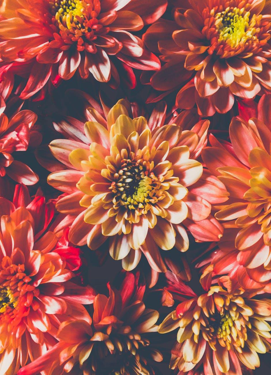 Should you write what you know, blog post by Aspasia S. Bissas, aspasiasbissas.com, write, writing, writers, am wtiting, writing tips, dahlias, flowers