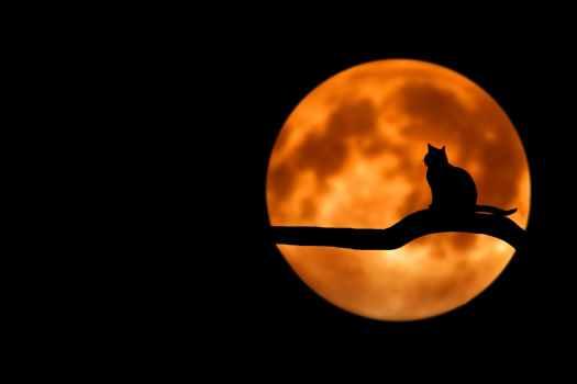 halloween, samhain, dia de los muertos, day of the dead, aspasia s. bissas
