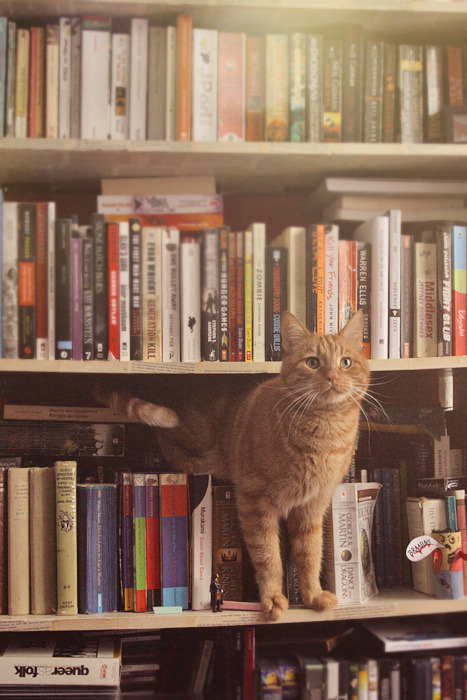 Cats and Books, blog post by Aspasia S. Bissas
