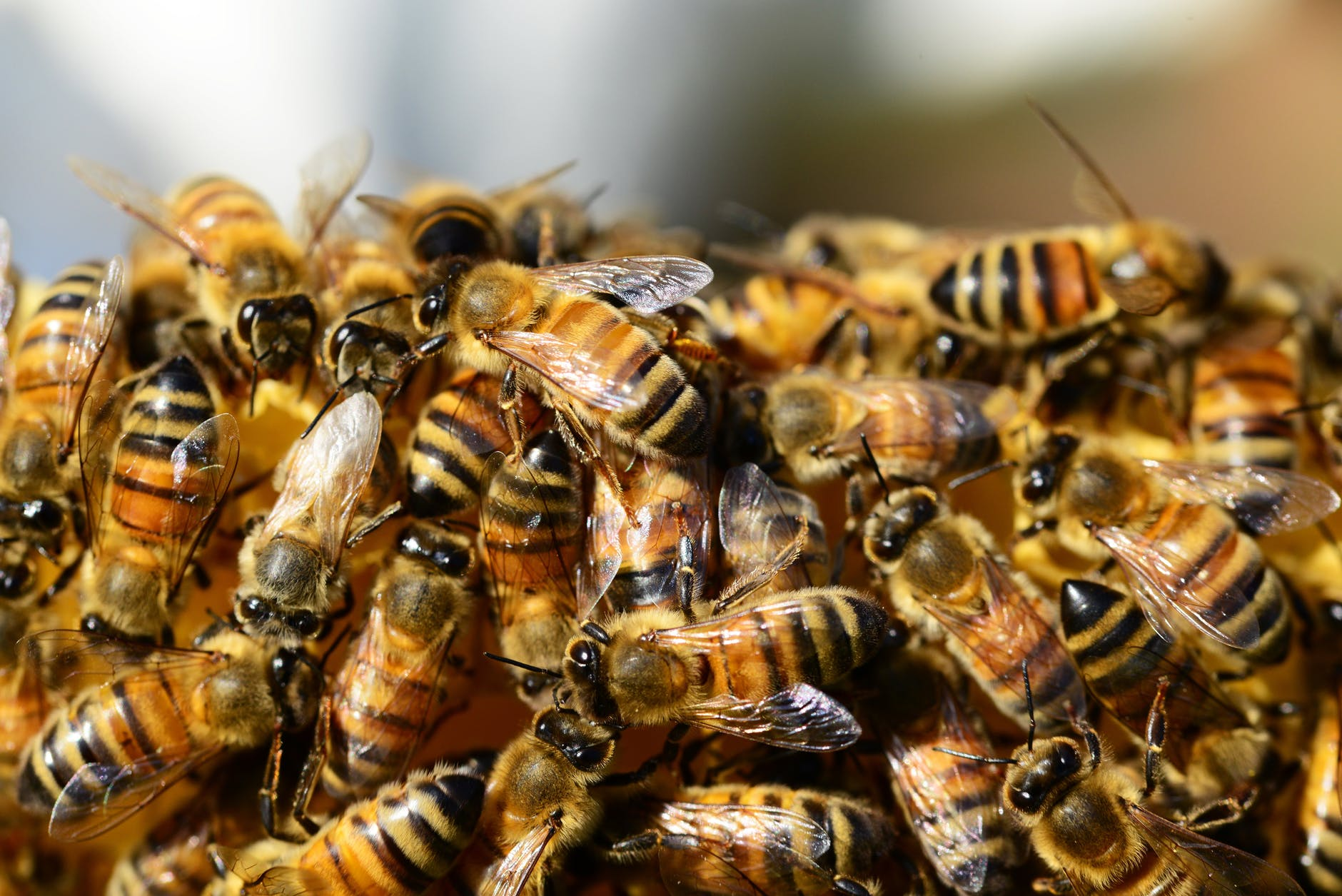 A Corona of Bees, blog post by Aspasia S. Bissas