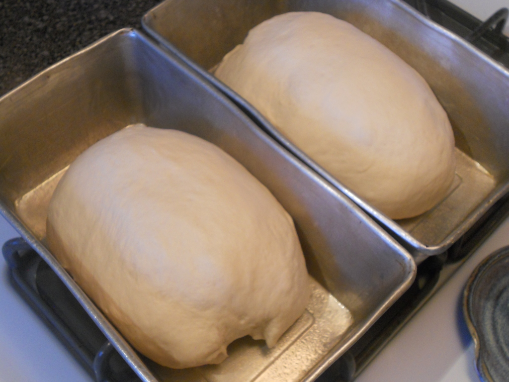 Baking Bread: Yeast in the Time of Corona, blog post by Aspasia S. Bissas