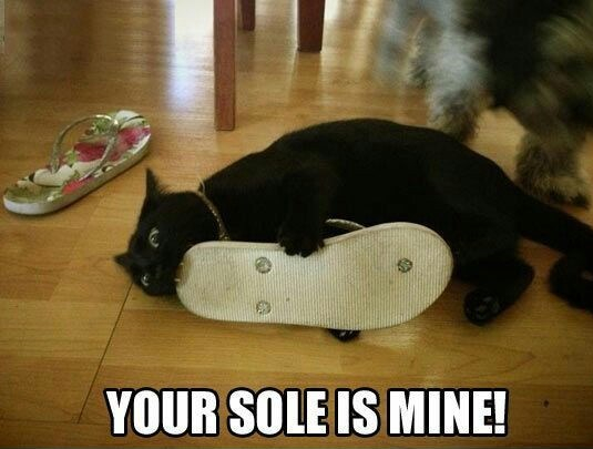 Currently reading, blog post by aspasia s. bissas, cat, cat jokes, cat memes, black cats, puns, wordplay, bad jokes, silly jokes, your sole is mine, aspasiasbissas.com