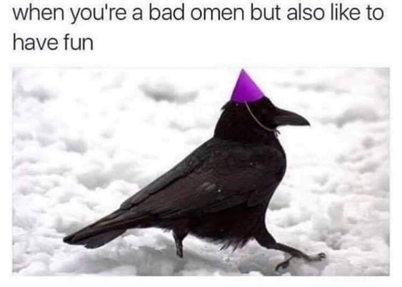 when you're a bad omen but also like to have fun, crow, party crow, aspasiasbissas.com, meme, memes, crow meme, corvid, corvids, omens, omen