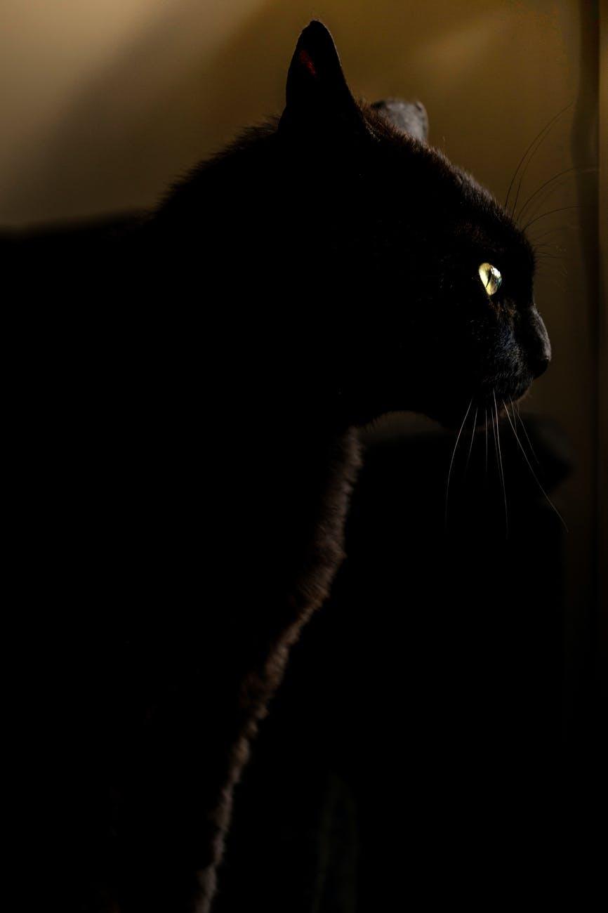 Hallotober Tag, blog post by Aspasia S. Bissas, Halloween, Samhain, October, Autumn, tag, blog post. Aspasia S. Bissas, spooky, aspasiasbissas.com, cat, cats, black cat