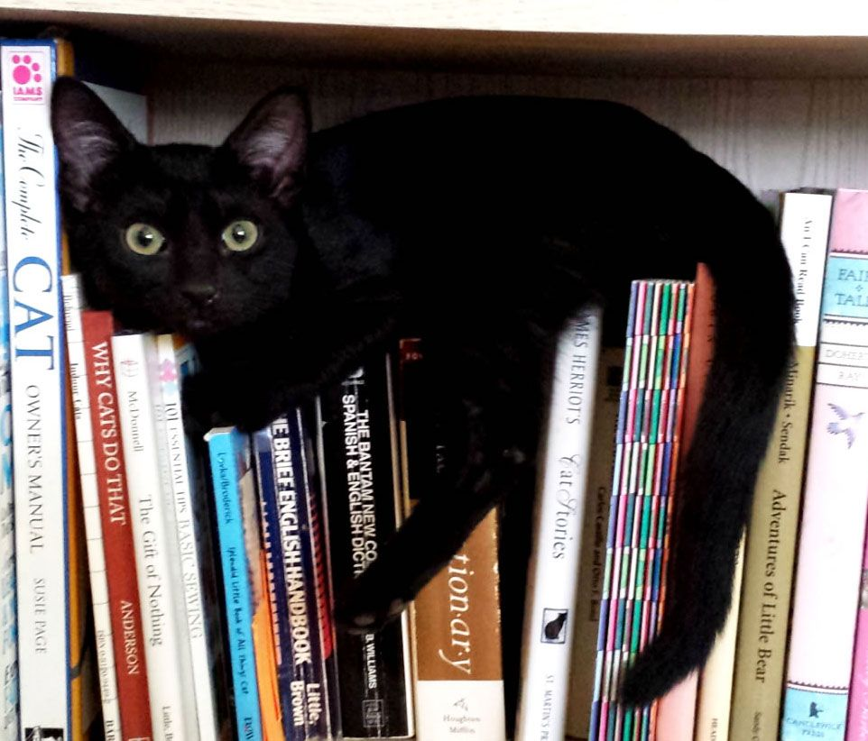 More Cats and Books, blog post by Aspasia S. Bissas, aspasiasbissas.com
