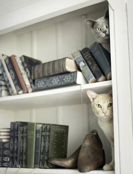 More Cats and Books, blog post via Aspasia S. Bissas, aspasiasbissas.com