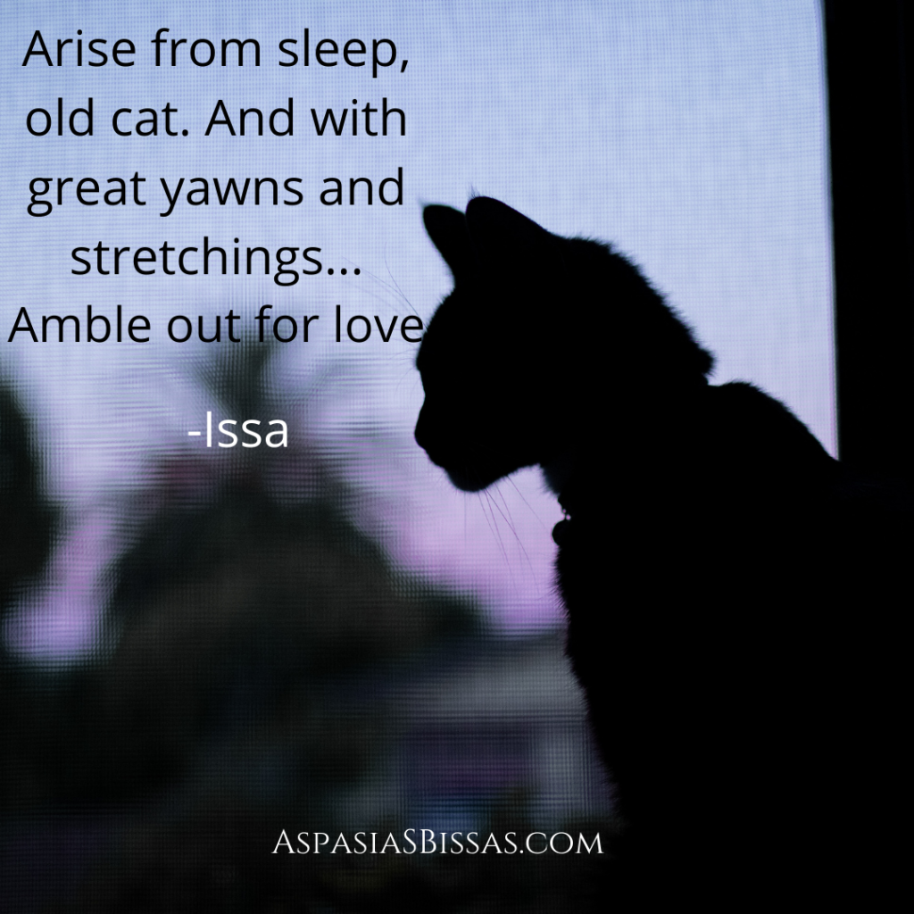 Quote of the Day, blog post by Aspasia S. Bissas, aspasiasbissas.com. Arise from sleep, old cat, and with great yawns and stretchings, amble out for love. Poem by Kobayashi Issa.