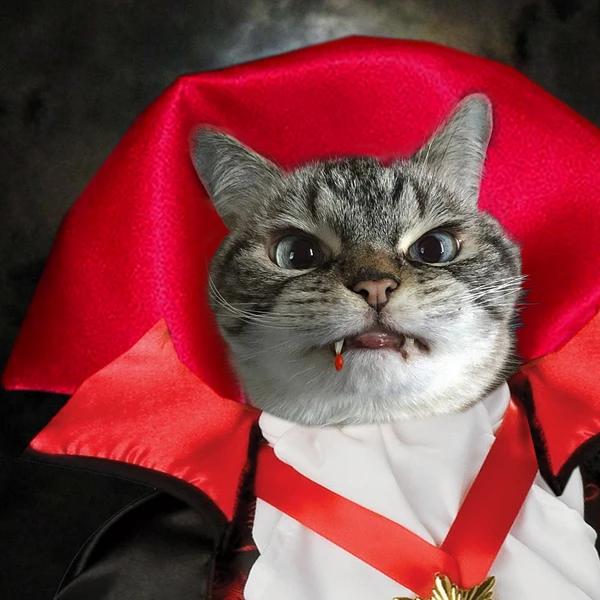 Happy World Goth Day, blog post by Aspasia S. Bissas, aspasiasbissas.com, goth, gothic, vampire, vampires, vampire cat Loki