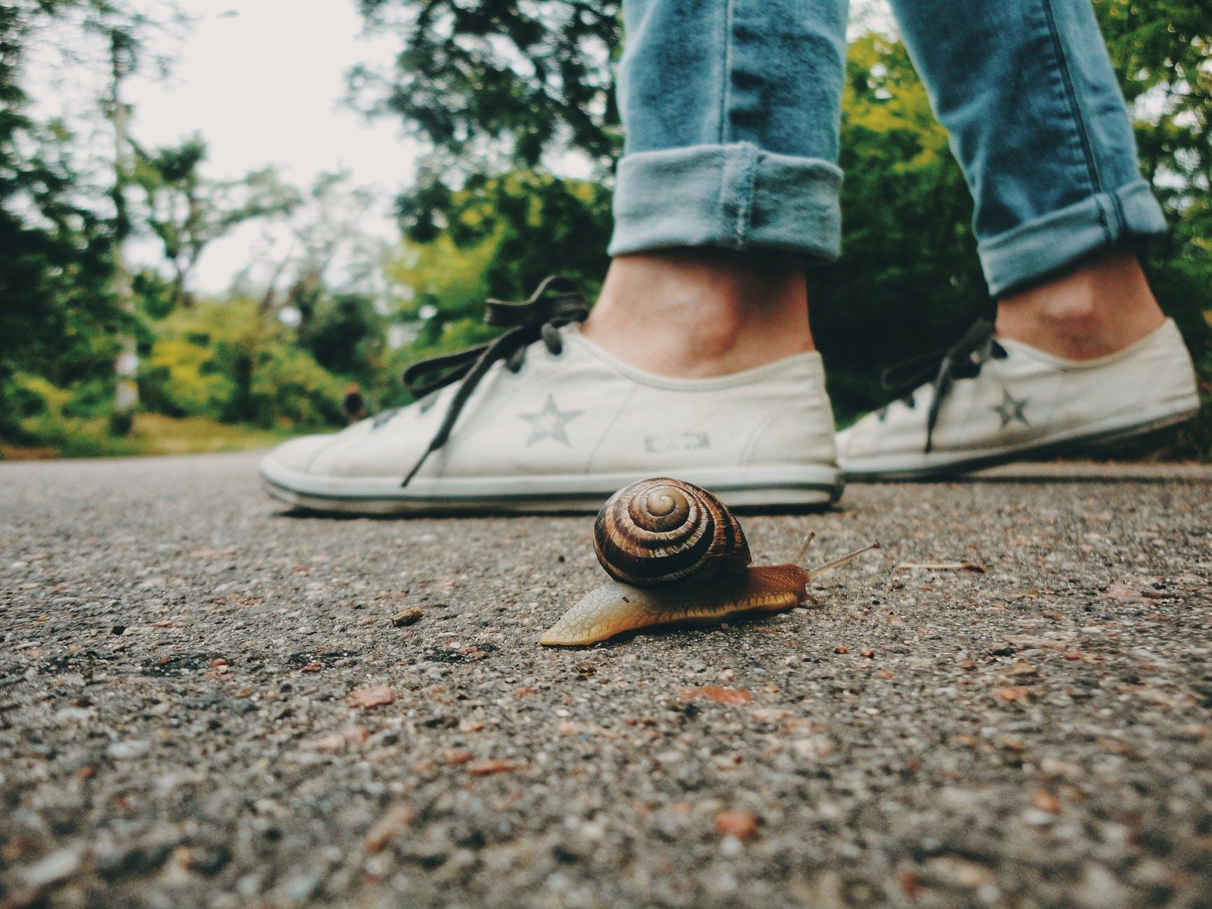 Confessions of a Slow Writer, blog post by Aspasia S. Bissas, aspasiasbissas.com, writing, am writing, writers, writers life, writing life