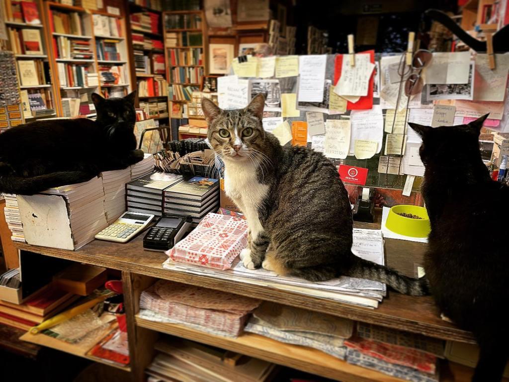 More Bookstore Cat Love, blog post by Aspasia S. Bissas. aspasiasbissas.com, books, bookstores, cat, cats, Vanice, Libreria Acqua Alto, Italy
