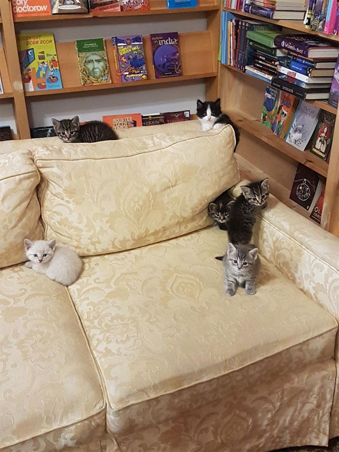 More Bookstore Cat Love, blog post by Aspasia S. Bissas. aspasiasbissas.com, books, bookstores, cat, cats, kittens, Otis & Clementines, Nova Scotia, Canada, adopt don't shop