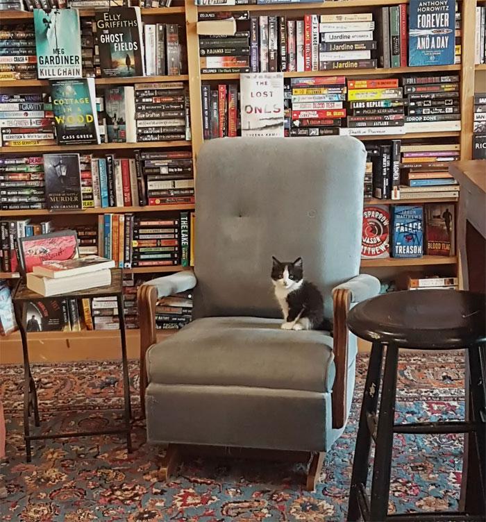More Bookstore Cat Love, blog post by Aspasia S. Bissas. aspasiasbissas.com, books, bookstores, cat, cats, Otis and Clementines, Nova Scotia