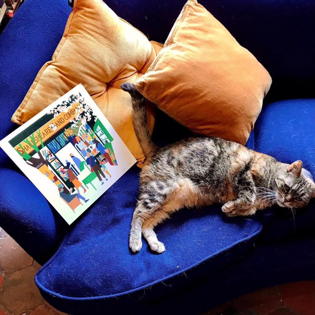 More Bookstore Cat Love, blog post by Aspasia S. Bissas. aspasiasbissas.com, books, bookstores, cat, cats, Paris, France, Shakespeare & Co, Agatha