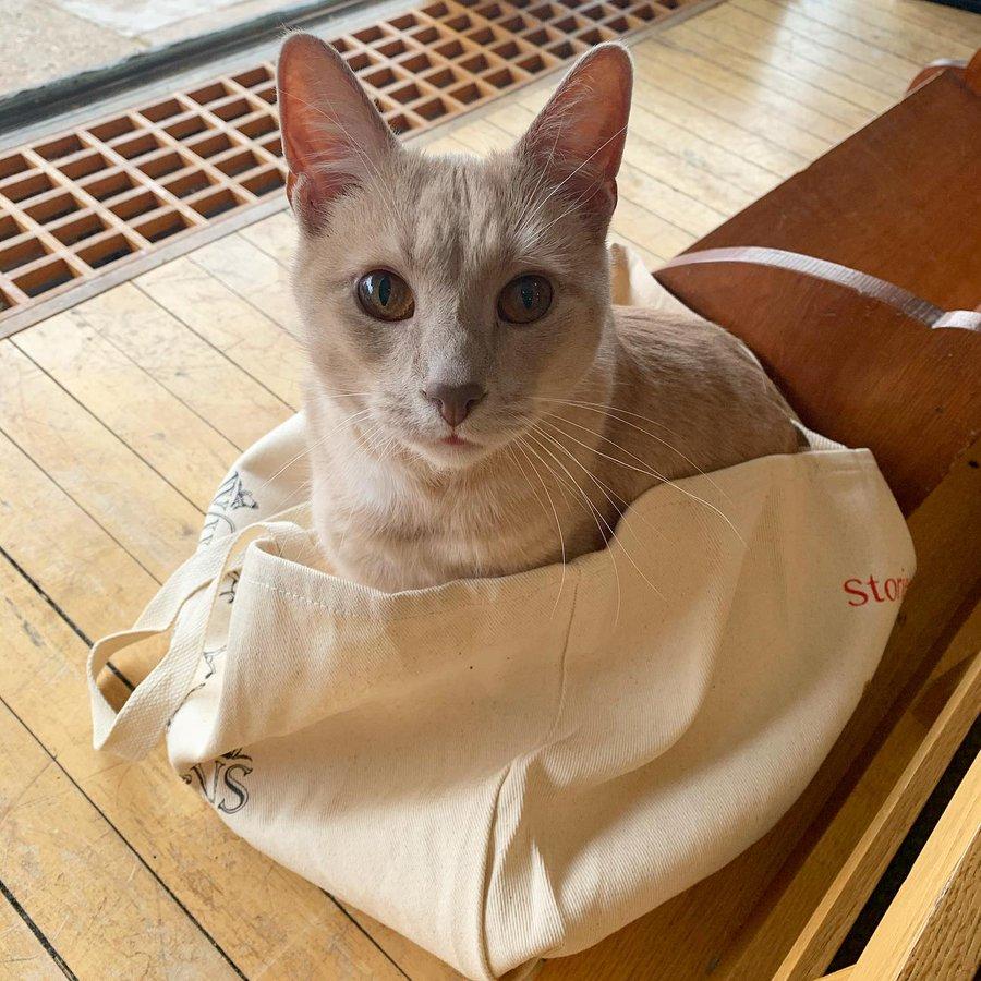 More Bookstore Cat Love, blog post by Aspasia S. Bissas. aspasiasbissas.com, books, bookstores, cat, cats, Wild Rumpus, Booker T